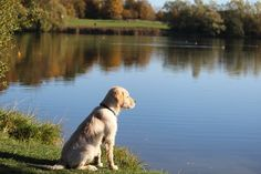 how much exercise does a labrador need? read more  https://labrador-life.com/how-much-exercise-does-a-labrador-need