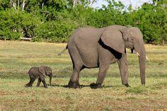 Let Us Plan Your Botswana Safari! - Contact Rothschild Safaris at 800-405-9463