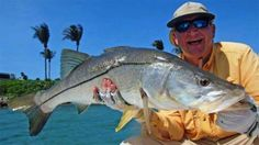 Florida's Poster-Child Fish:Season open for the uncommon Common Snook, a favorite among anglers.   Outdoor Channel