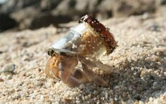 We aren't sure if this is in the wild, or someone's pet crab to whom the owner gave an offering of a broken bottle as shelter. Either way, it's kinda cute and kinda frightening.