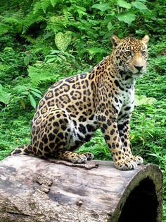 "Corcovado National Park ~ called by National Geographic ""the most biologically intense place on earth."" But don't go without a guide; it has big cats. #Costa_Rica #Nature #Corcovado_National_Park"