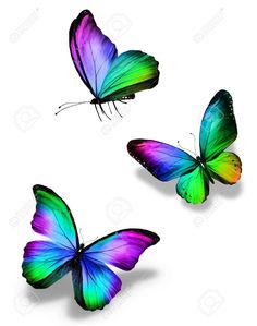 Three color butterflies, isolated on white - Millions of Creative Stock Photos, Vectors, Videos and Music Files For Your Inspiration and Projects. Colorful Butterfly Tattoo, Butterfly Drawing, Rainbow Butterfly, Butterfly Pictures, Butterfly Painting, Butterfly Watercolor, Butterfly Wallpaper, Purple Butterfly, Art Papillon