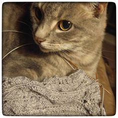 Moya supervising a matchy-matchy project that she seems to think I'm making just for her. HAH! These socks are for ME girl. This is my Weathered Wood colorway and I'm almost done with my Oak Leaf & Acorn socks....