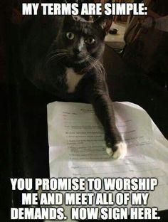 Cats rule #cat #humor #cats #funny =^..^= www.zazzle.com/kittyprettygifts
