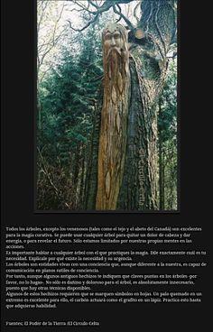 El poder y la magia de los árboles