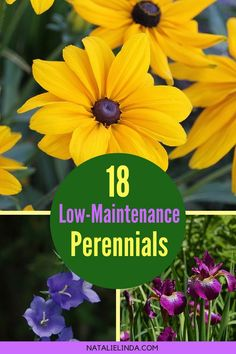 Flower Gardening For Beginners These 18 low-maintenance perennials are perfect for easy gardening. They're full of color and texture, and are super easy to grow in both small and large gardens! Easy Garden, Flowers Perennials, Gardening For Beginners, Beautiful Flowers Garden, Perennials, Plants, Gardening Tips, Organic Gardening, Low Maintenance Garden