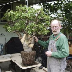 plant: Readers describe their plants and seek details on care Ed Gordon's 35 year old Jade plant! Beautiful, good article too.Ed Gordon's 35 year old Jade plant! Beautiful, good article too. Bonsai Ficus, Jade Bonsai, Succulent Bonsai, Succulent Gardening, Bonsai Garden, Cacti And Succulents, Planting Succulents, Planting Flowers, Organic Gardening