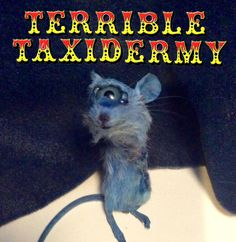 Terrible Taxidermy. The only Shop to stock creations like this!