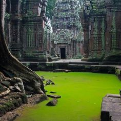 The 800 year old temple of Ta Prohm, Cambodia.