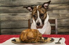 29 Dogs Ready To Celebrate Thanksgiving With You! [PICTURES] - DogTime Grooming Salon, Cat Grooming, Pet Dogs, Pets, Happy Thanksgiving, Good Times, Your Dog, Fun Stuff, Families