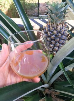 This pineapple tepache recipe uses pineapple skins to produce a delicious, refreshing probiotic beverage that tastes like pineapple kombucha. Probiotic Drinks, Alcoholic Drinks, Beverages, Tepache Recipe, Kombucha Bottles, Mexican Drinks, Pet Water Fountain, Fermented Foods, Recipes