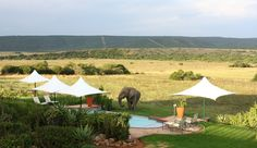 Shamwari Game Reserve, Eastern Cape - A hotel featured by Kuoni Travel for Eastern Cape Game Reserves holidays Port Elizabeth South Africa, Game Reserve South Africa, Private Games, African Safari, Lodges, Places To Visit, Around The Worlds, Cape, Elephants