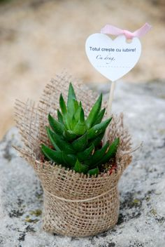 Suculente marturii #succulents #favors #weddingplants #potfavors