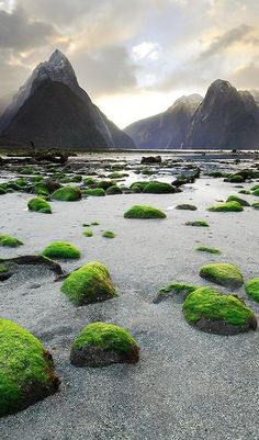 In Milford Sound, New Zealand.