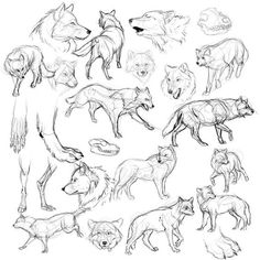 wolf study how to draw wolves | How to draw | Pinterest | Lobos ...