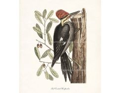 Red Crested Woodpecker Cottage Chic Natural by HighStreetVintage, $15.00