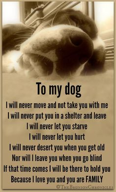 To my four legged kids.....always