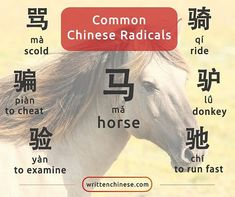 Characters containing the 马 (mǎ) are often connected to horses and movement. 骗 (piàn) also means to get on a horse.