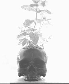 Skull Planter, Cold Mountain, Human Skull, Ceramic Planters, Modern Decor, Skulls, Etsy Shop, Metal, Garden