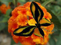 ~~ Butterfly on Orange by Eleonora Eli~~