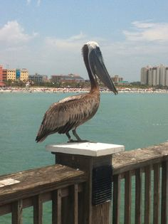Clearwater Florida - the view from Pier 60