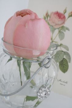 a rose in a sweet hanging vase