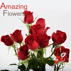 Dicover one of most beautiful spray roses for your wedding. Buy now with 5% OFF