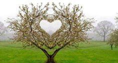 . naturaleza heart, god signatur, corazon heart, natur heart, trees, garden natur, srcaheart natur, quot, heart tree
