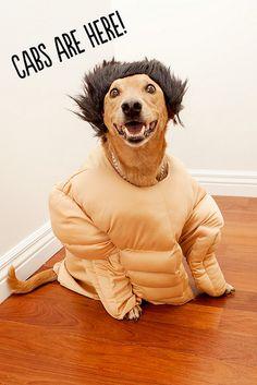 Dooce's dog for Halloween.