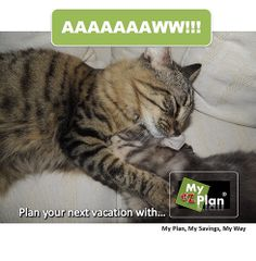 IRL ! Weird Animal | It's that easy, with myezplan ! Go to www.myezplan.com & discover - My trip to Destin  with myezplan - Pinterest #cute #pets #naturelover #farm #animallovers