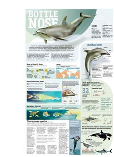 Facts about Bottlenose Dolphin. A great site for info is http://kids.nationalgeographic.com/kids/animals/creaturefeature/bottlenose-dolphin/
