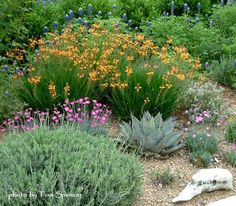 Texas Style Front Yard Landscaping Ideas and Tips - All For Garden Plants, Front Yard Landscaping, Backyard Garden, Texas Landscaping, Xeriscape Landscaping, Outdoor Gardens, Texas Gardening, Landscaping Plants, House Landscape