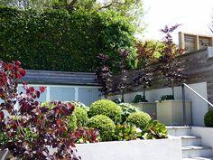 http://www.hedge.co.nz/uploads/18Tinakori800x600.jpg