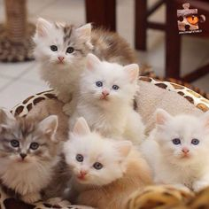 Kitties From amazing_picturez