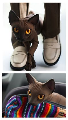 Chocolate by Katrin-Vates on deviantART cat doll BJD