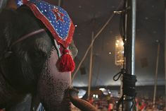 Elephant in Sandpoint, Indiana, 2006. Photo by delunachick, via Flickr.