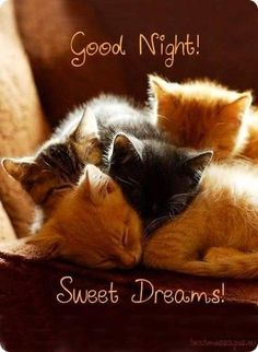 good night quotes 50 Good Night Messages For Friends With Images Good Night Cards, Cute Good Night, Good Night Greetings, Good Night Gif, Good Night Sweet Dreams, Good Night Moon, Best Good Night Quotes, Goodnight And Sweet Dreams, Good Night Prayer