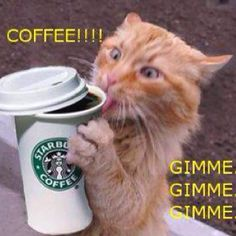 Go ahead, console yourself with coffee. You're not heartbroken. It's awesome you get to have another Starbucks americano instead of creating new life this month. Infertility Explained By 33 Impossibly Adorable Cats Cute Cats, Funny Cats, Funny Animals, Animal Funnies, Funniest Animals, Talking Animals, Funny Cartoons, Animal Memes, Crazy Cat Lady