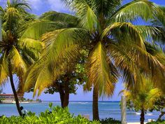 Island Beach, Palm Trees, Water, Outdoor, Palm Plants, Gripe Water, Outdoors, Outdoor Games, The Great Outdoors