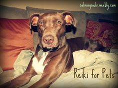 Reiki is not just for people!