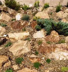 Kreakert sziklakert 2014 Junius Grand Canyon, Garden, Nature, Travel, Garten, Naturaleza, Viajes, Gardens, Grand Canyon National Park