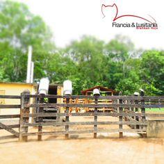 Los corrales de las #HaciendasFranciaYLusitania #Haciendas #Montería #Ganadería #Colombia @asocebu @fedegan