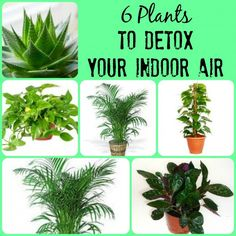 6 Plants to detox your indoor air - Wooly Mates Blog. Chemical Free living