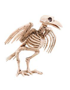 Decorazione di Halloween: scheletro di corvo: Questa decorazione di Halloween consisite nel finto scheletro di un corvo, realizzato in plastica e grande circa 19.5 cm.Questa decorazione è articolata: potrai quindi muovere il becco, le ali...