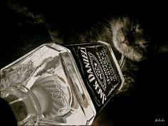 DRUGIE ŻYCIE BUTELKI Jacka Daniel'sa LAMPA zarówno STOJĄCA jak i WISZĄCA Światło Led 4,5W=40W ciepły biały ☼ GU10 ●/ /▌ / )