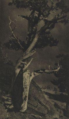 Beautifull work: The Dying Cedar   Brigman, Annie A., b.1869-1950  Camera Work XXV, 1909