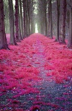 Red Leaves Road In The Netherlands
