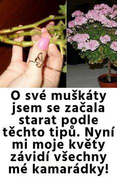 O své muškáty jsem se začala starat podle těchto tipů. Nyní mi moje květy závidí všechny mé kamarádky! Terrarium, Gardening, Terrariums, Lawn And Garden, Horticulture