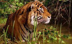 Pesquisa avalia efeitos da iluminação LED sobre espécies selvagens