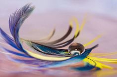 Peacock feather and a drop of water Great Pic, Dew Drops, Water Drops, Just Amazing, Photo S, Bubbles, Bee, Typography, Nature